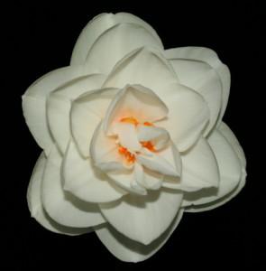 Rose Garden 4 W-R