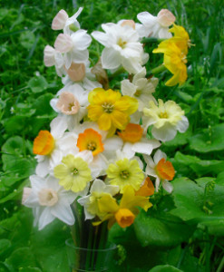 Mini_Bouquet_x