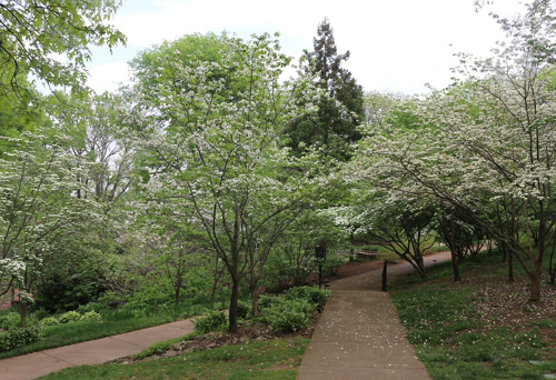Dogwood pathway at Cheekwood Estate and Gardens